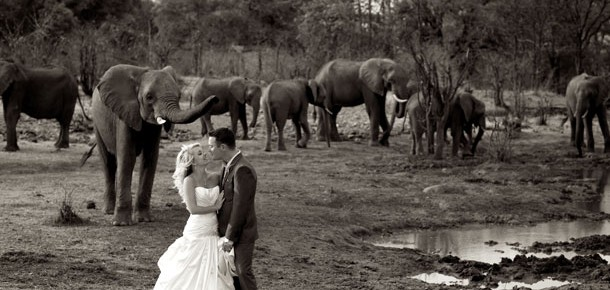 Weddings Out of Africa—South Africa that Is!